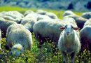 """Llegan """"las carnes con estilo"""", el plan de promoción de las IGP´s ternera gallega y ternasco de Aragón"""