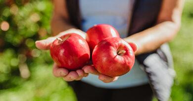 Los secretos de la agricultura ecológica de manos del mayor productor de manzana orgánica de Europa, Bio Val Venosta